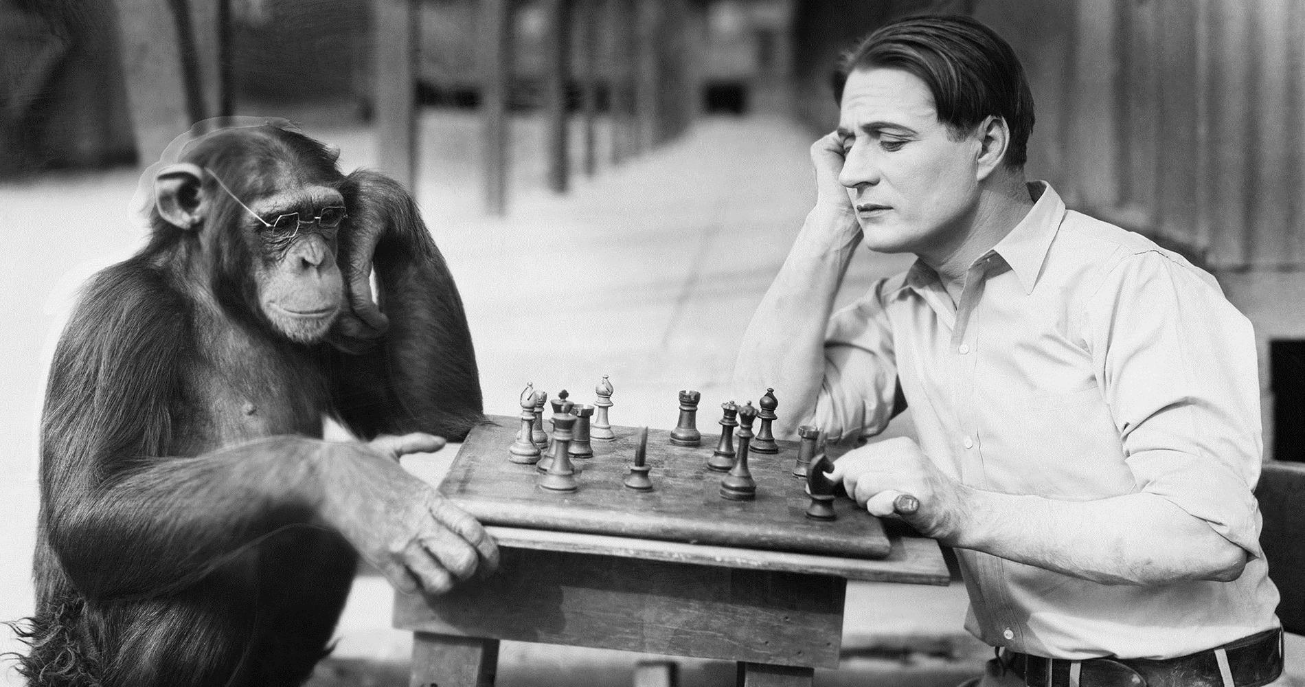 Насколько отличается мозг человека и обезьяны?