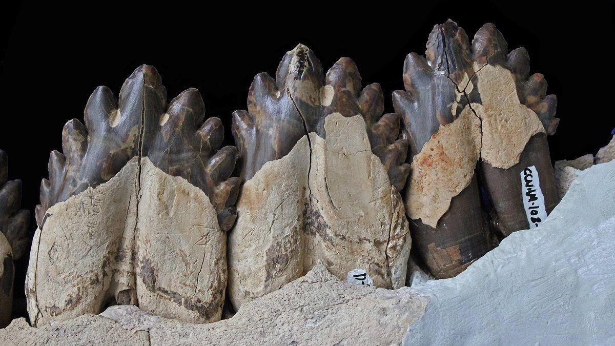 От зубов к усам: найдено недостающее звено в эволюции китов