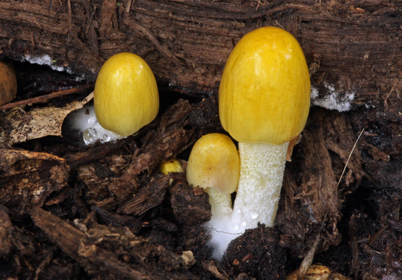 Почему «волшебные» грибы стали «волшебными»
