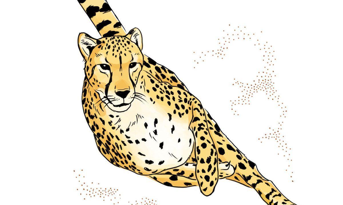 Залог успешной охоты гепарда кроется в его уникальном внутреннем ухе