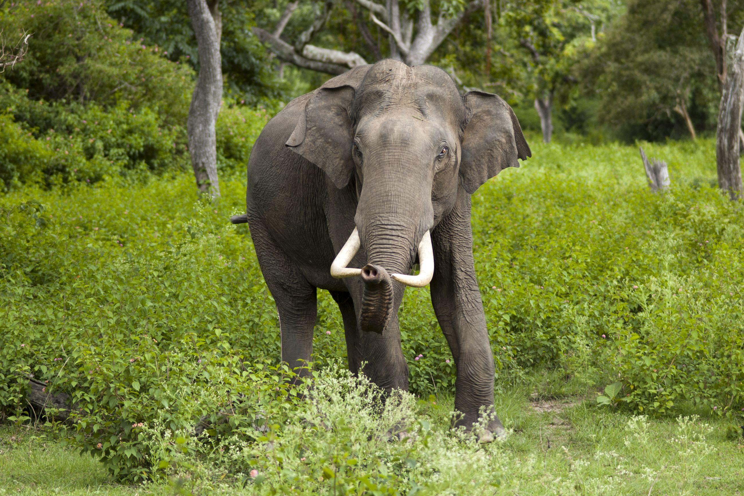 Бывший «мертвый» ген защищает слонов от рака