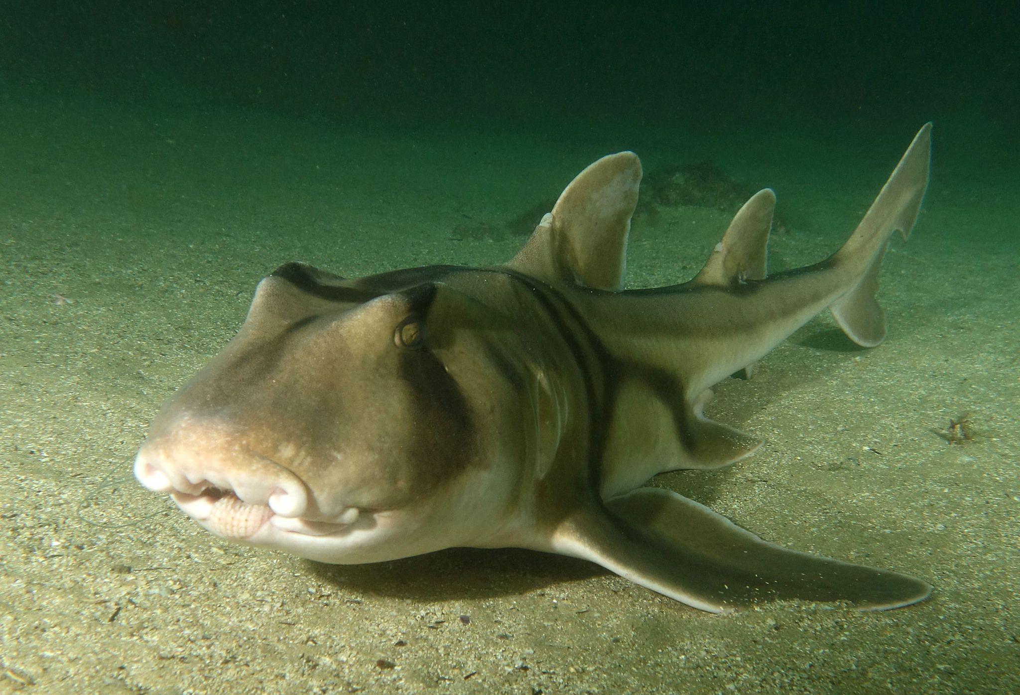 У акул нашли индивидуальные черты характера