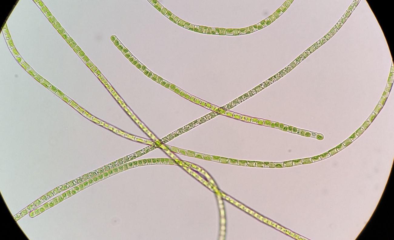 Как гормон роста помог растениям колонизировать сушу
