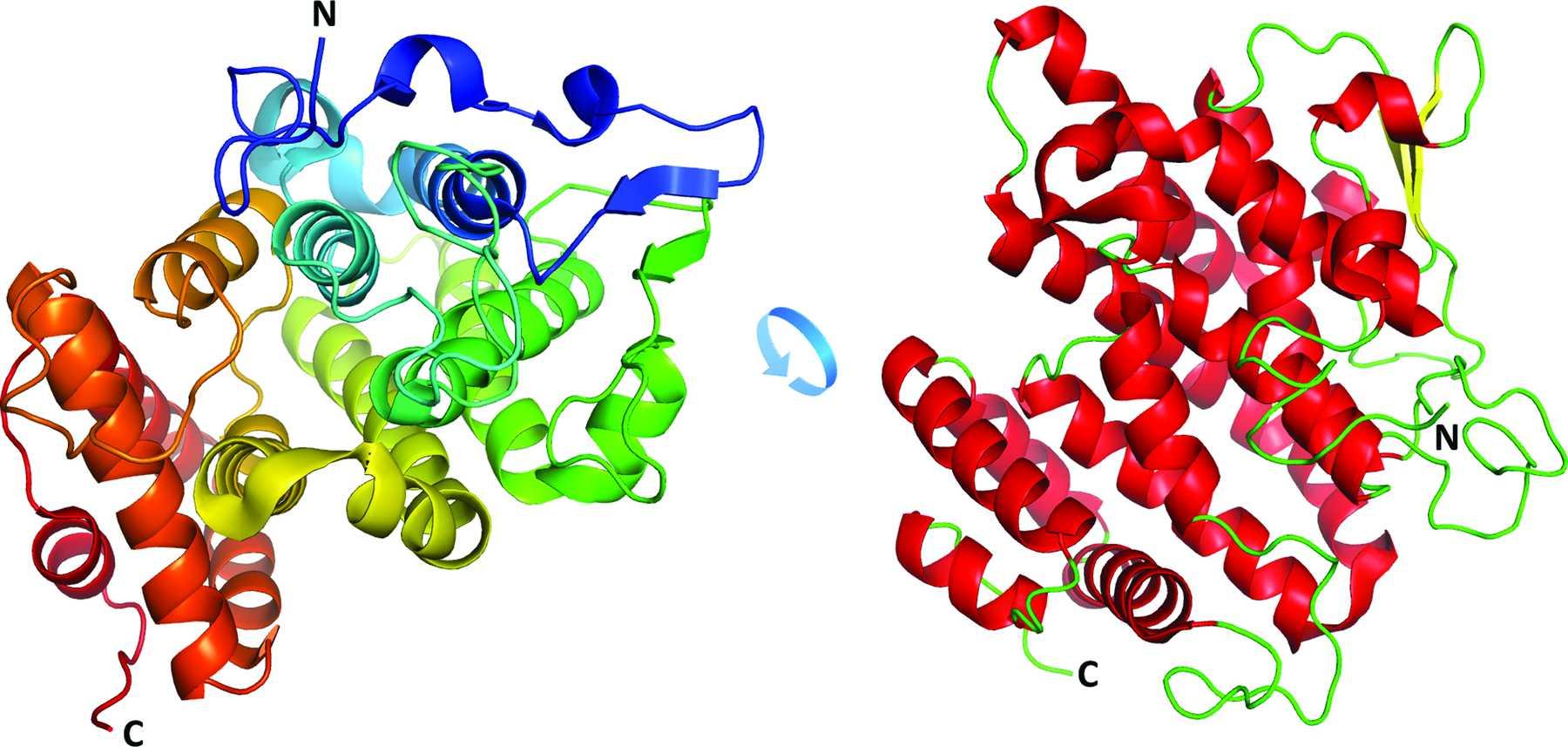 Ученые определили структуру антибактериального белка в молоке утконоса