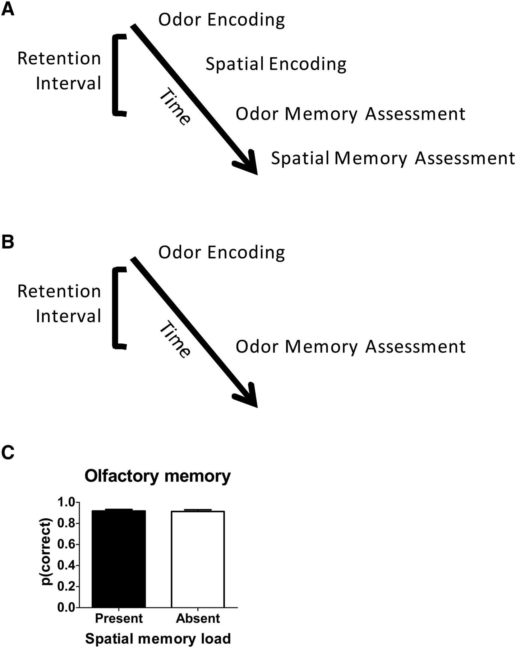 Кратковременная память: два в одном