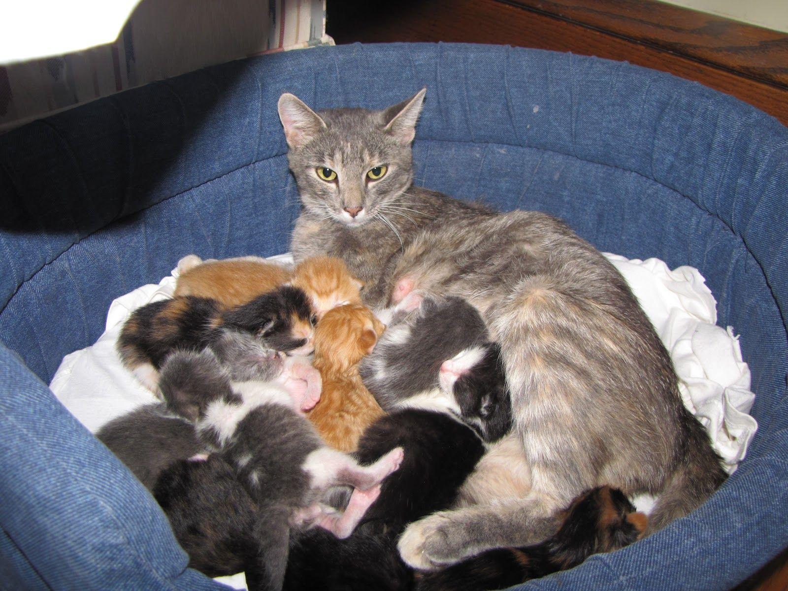 Как появились домашние кошки