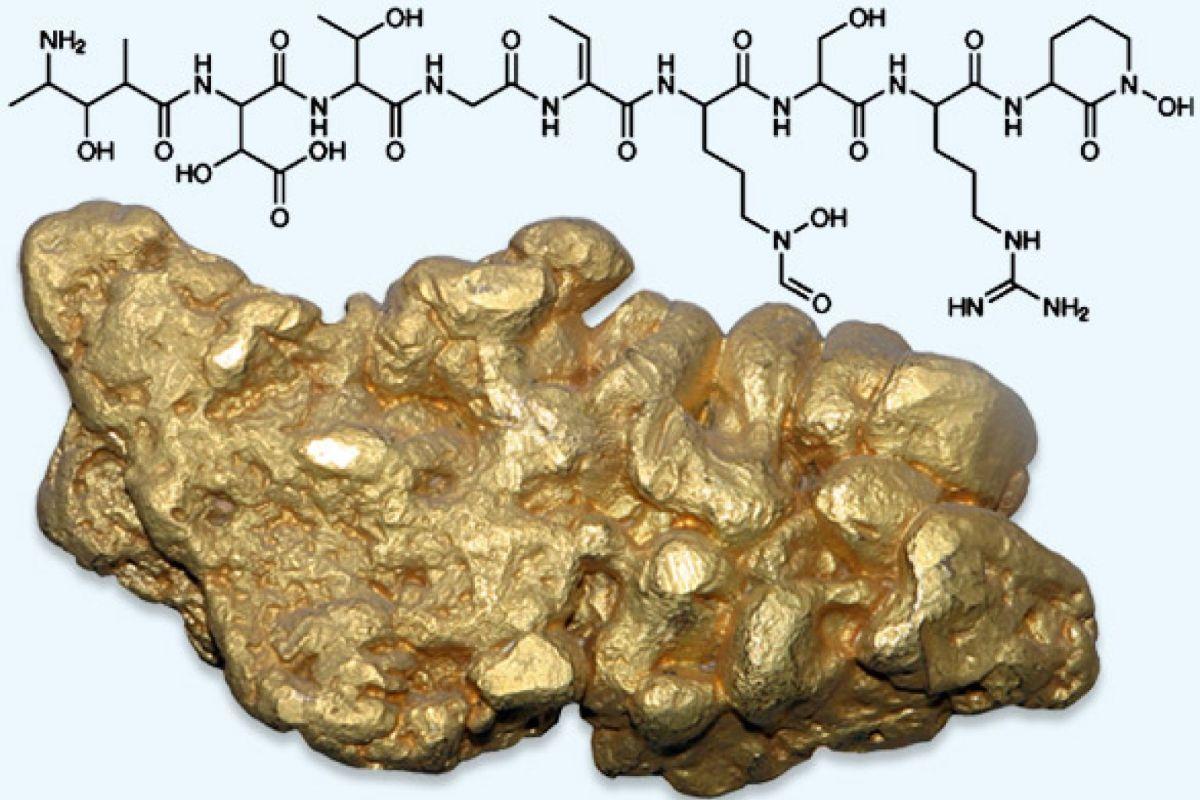 Биологи получили вещество, выделяющее золото из морской воды