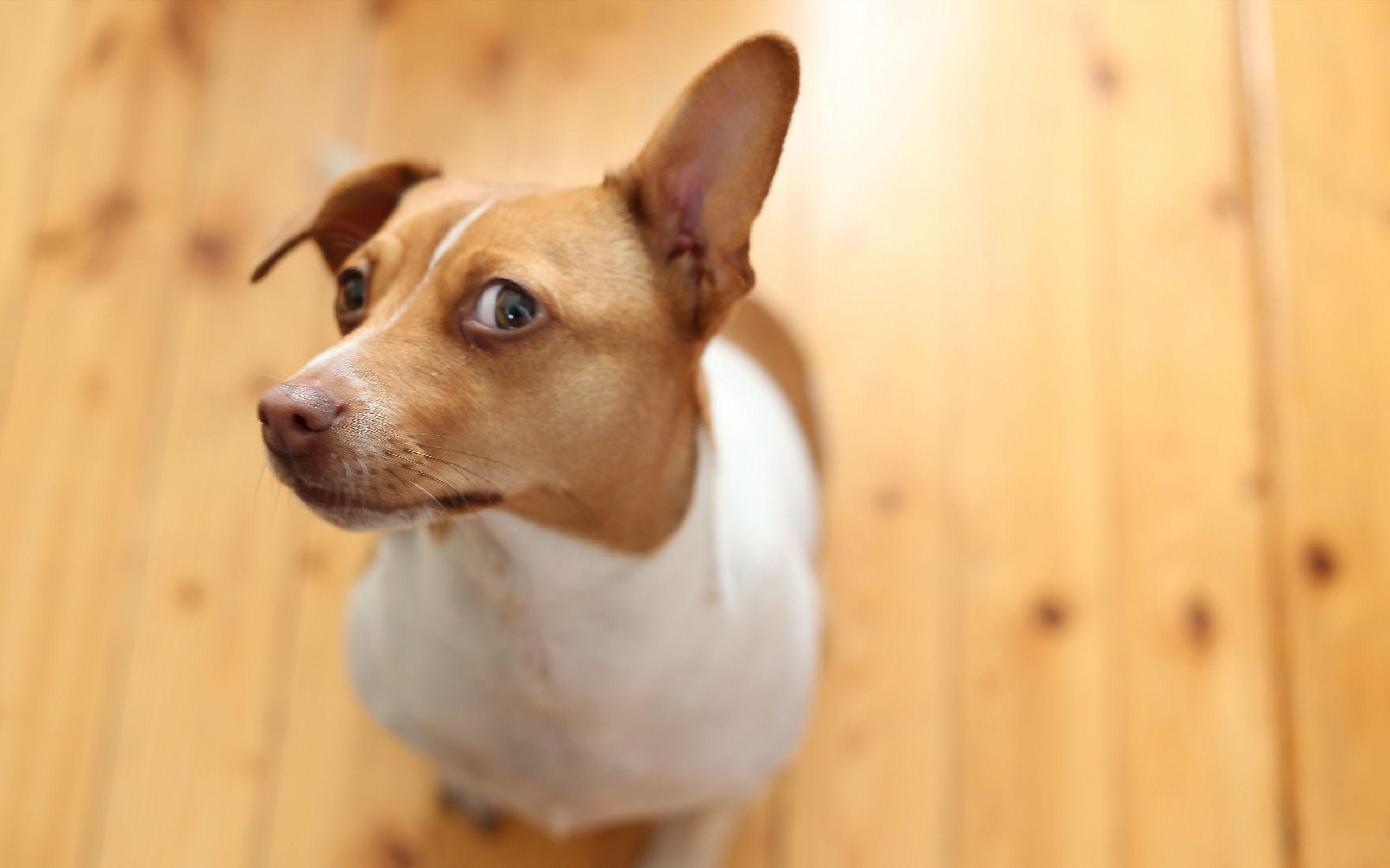 Использование «детского» голоса привлекло внимание собак