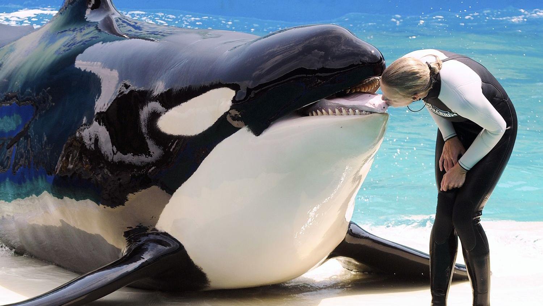 Почему водные звери такие маленькие