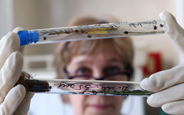 Обнаружен новый штамм вируса клещевого энцефалита