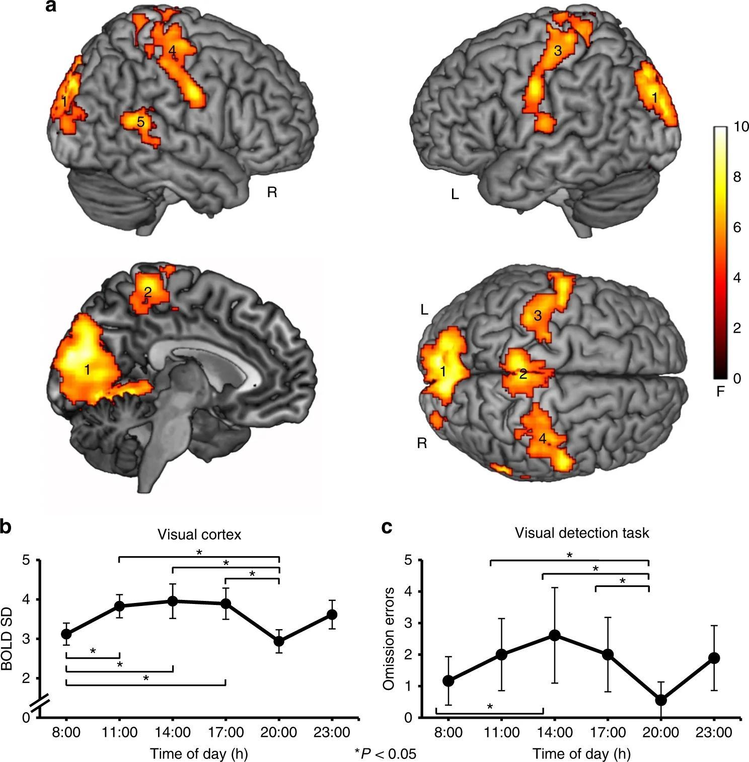 Утром и вечером мозг лучше реагирует на слабые визуальные стимулы
