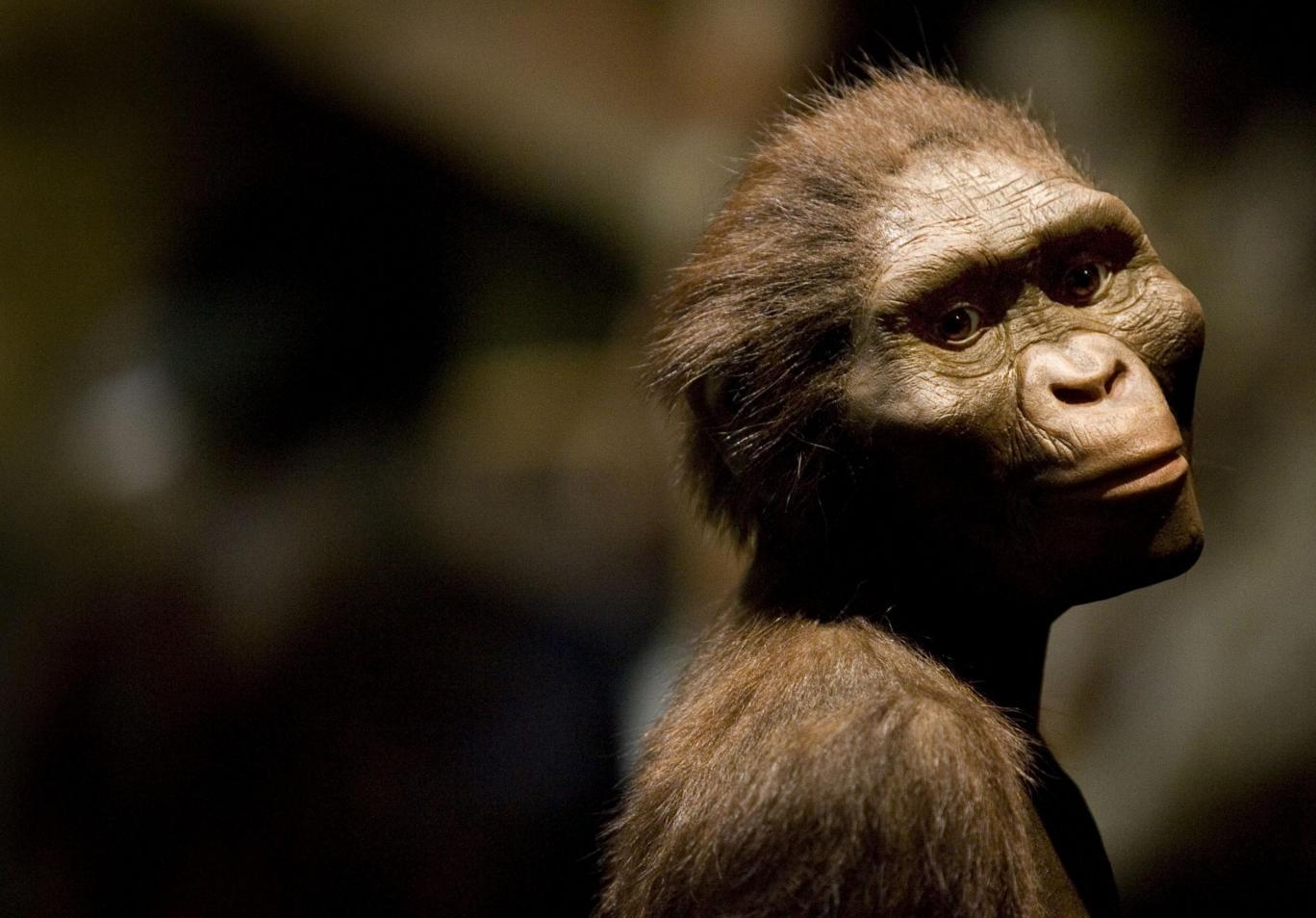 Предки людей хорошо ходили по земле