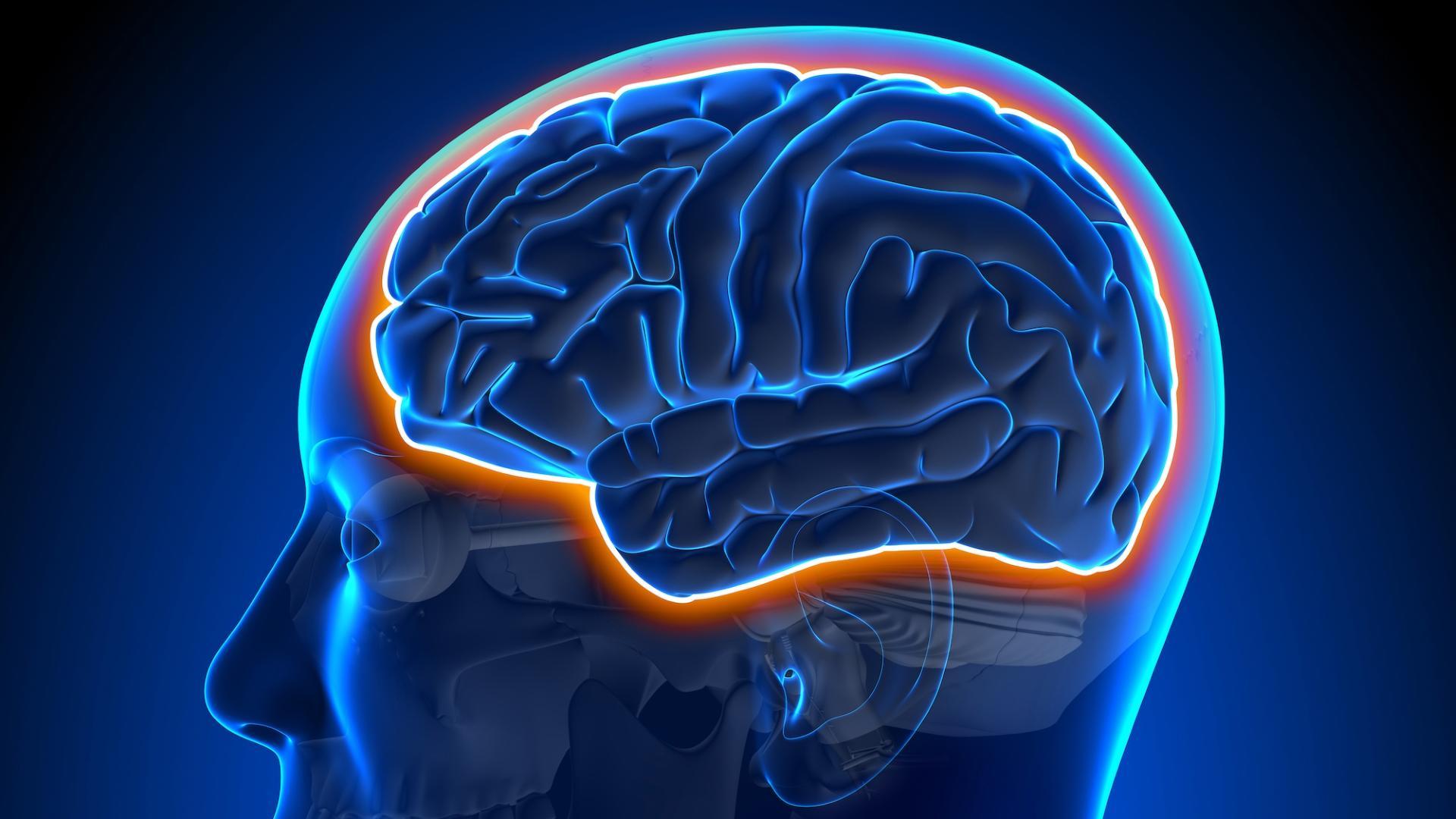 Защищающий мозг барьер обладает собственными биологическими часами и слабеет к ночи