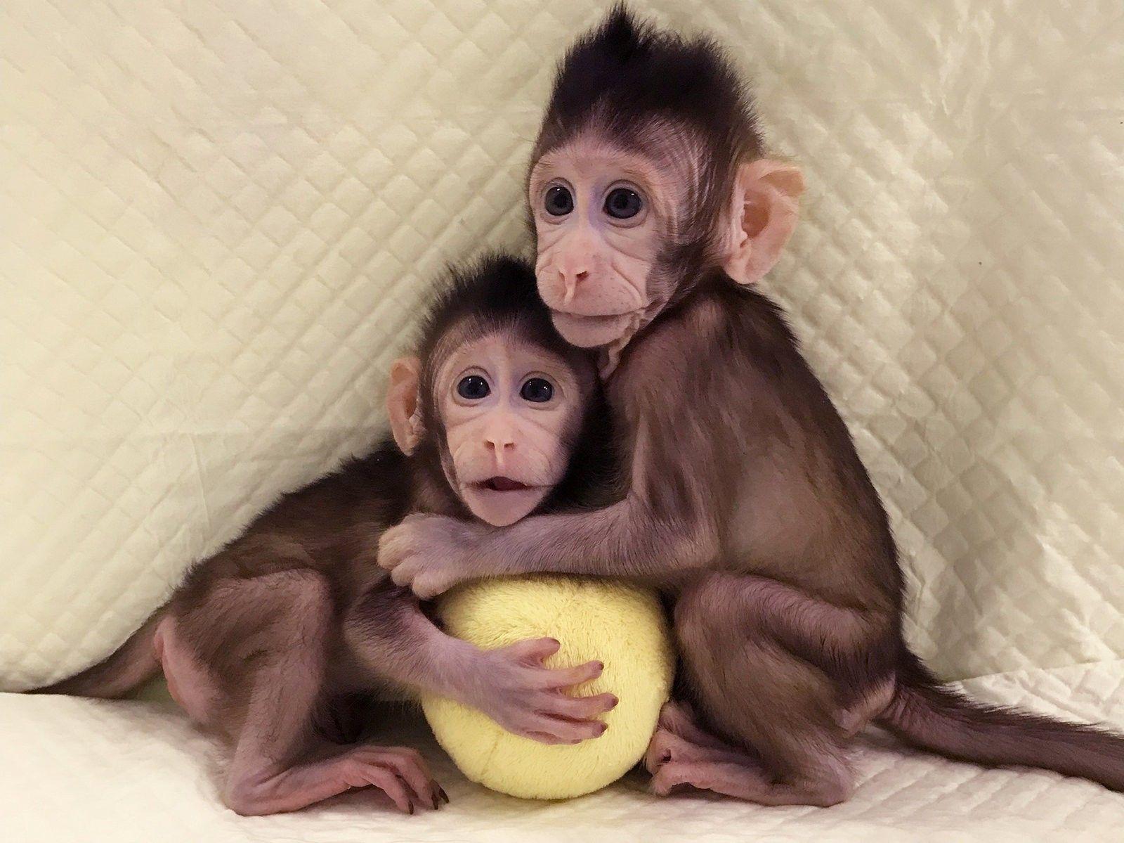 Клонирование домашних любимцев набирает обороты