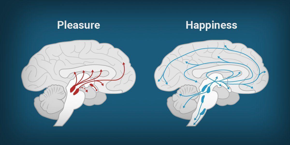 Почему чувство счастья не вызывает зависимости