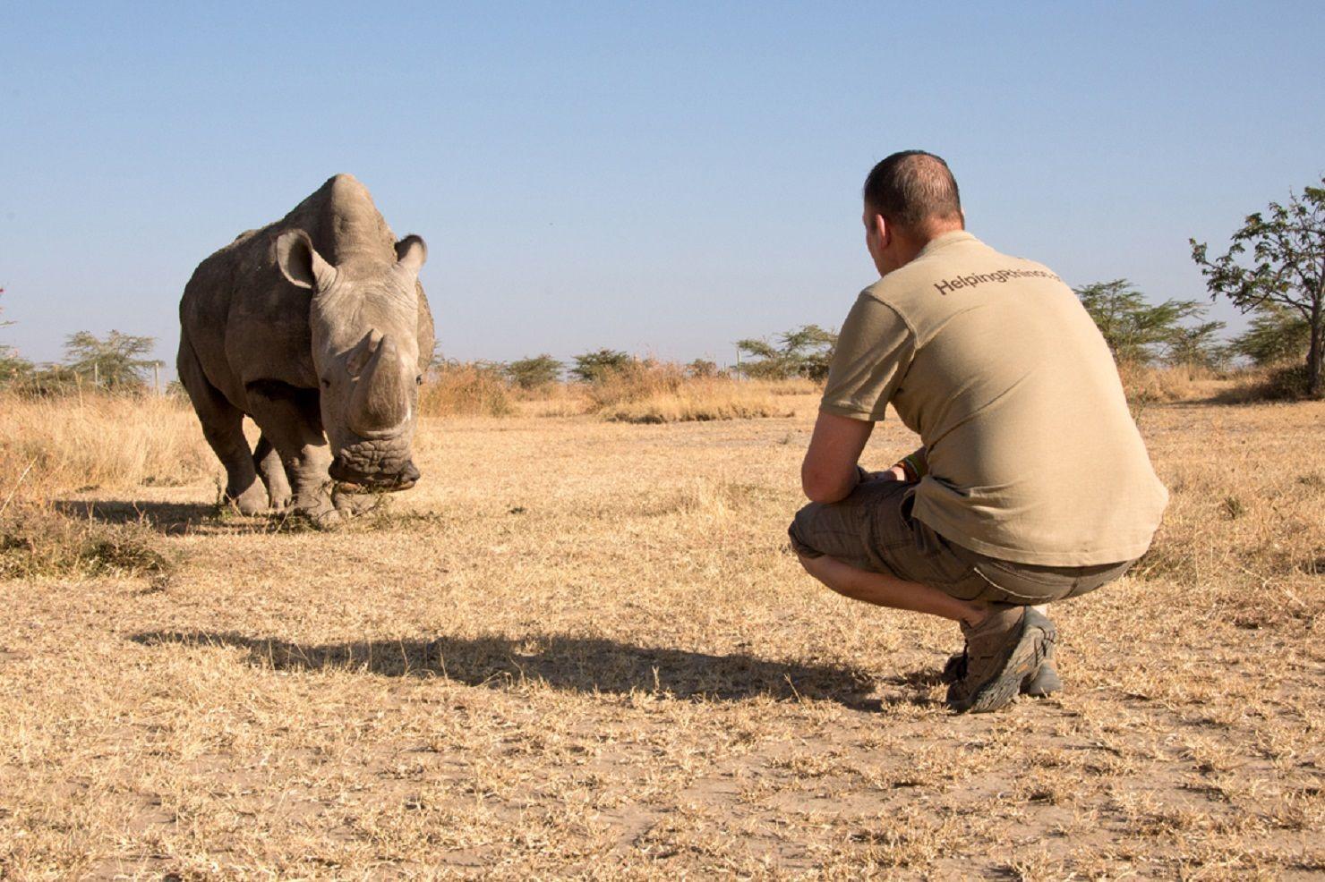 От белых носорогов остались только 2 самки