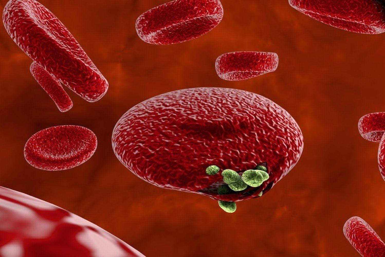 Малярия приманивает комаров к людям