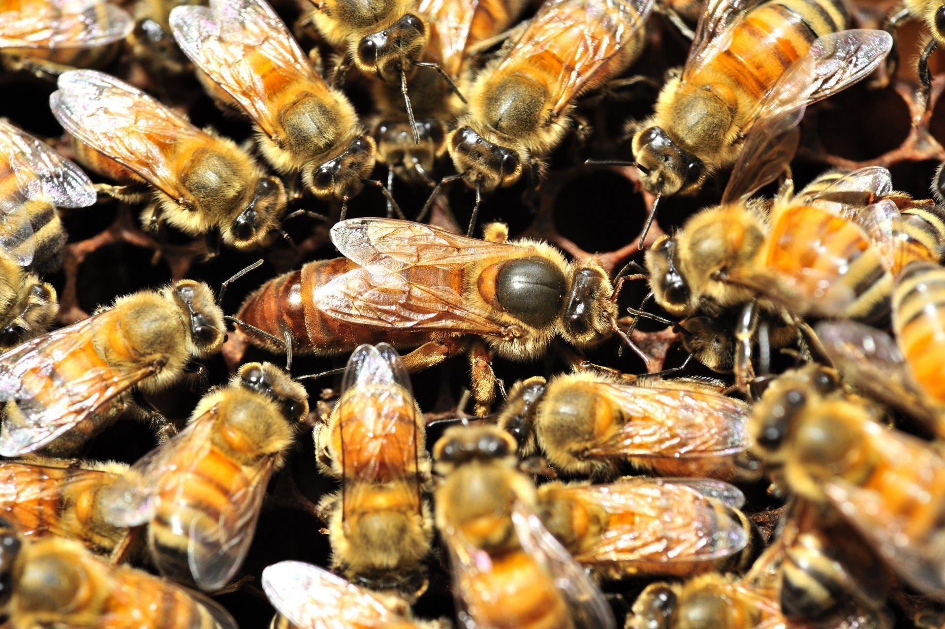 Пчелы как нейроны