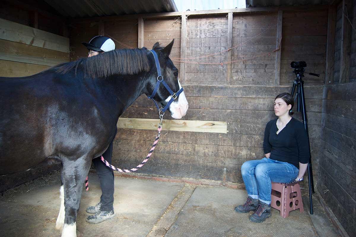 Лошадь помнит ваши эмоции