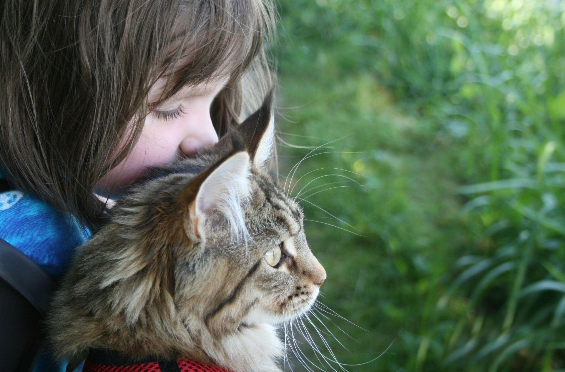 Кошки любят людей больше, чем еду
