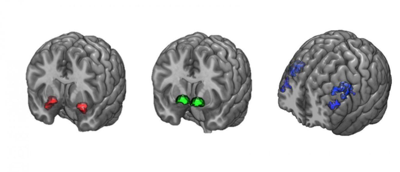 Контроль памяти и внимания защитил от появления тревожного расстройства