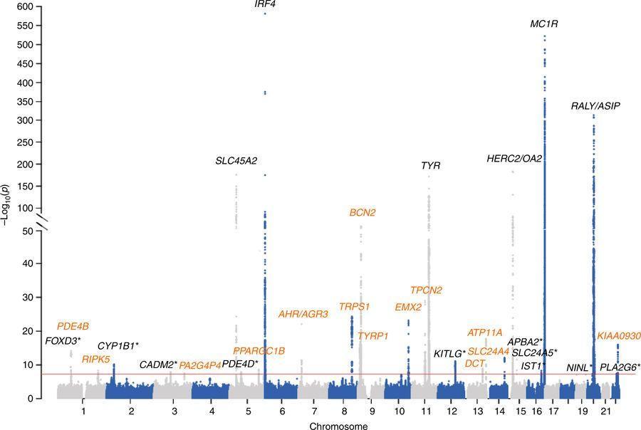 Загар и рак кожи объединены общей генетической ассоциацией