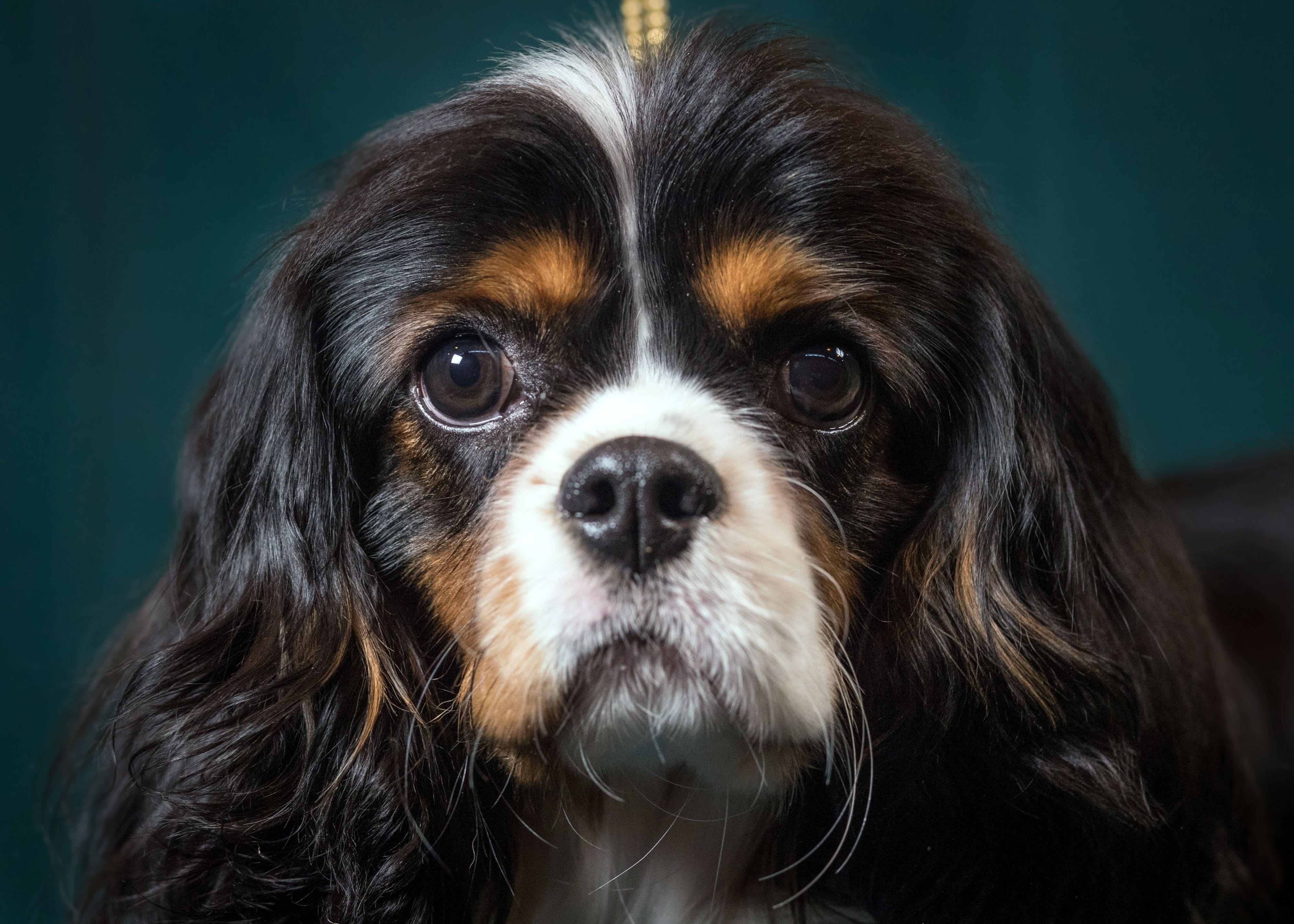 Секретный гарвардский стартап хочет сделать бессмертными собак