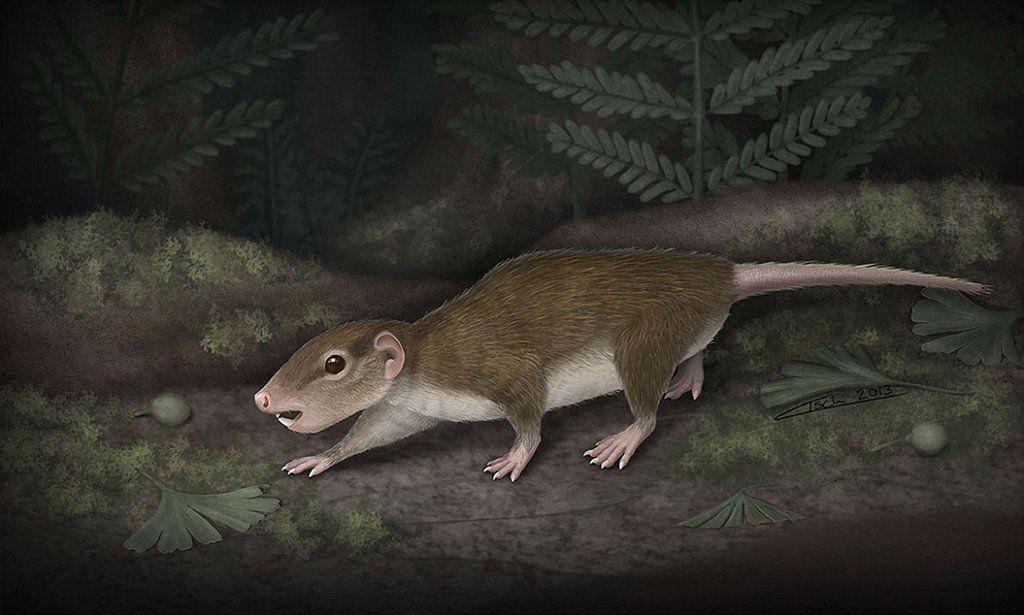В Трансильвании нашли ископаемое млекопитающее с крошечным мозгом