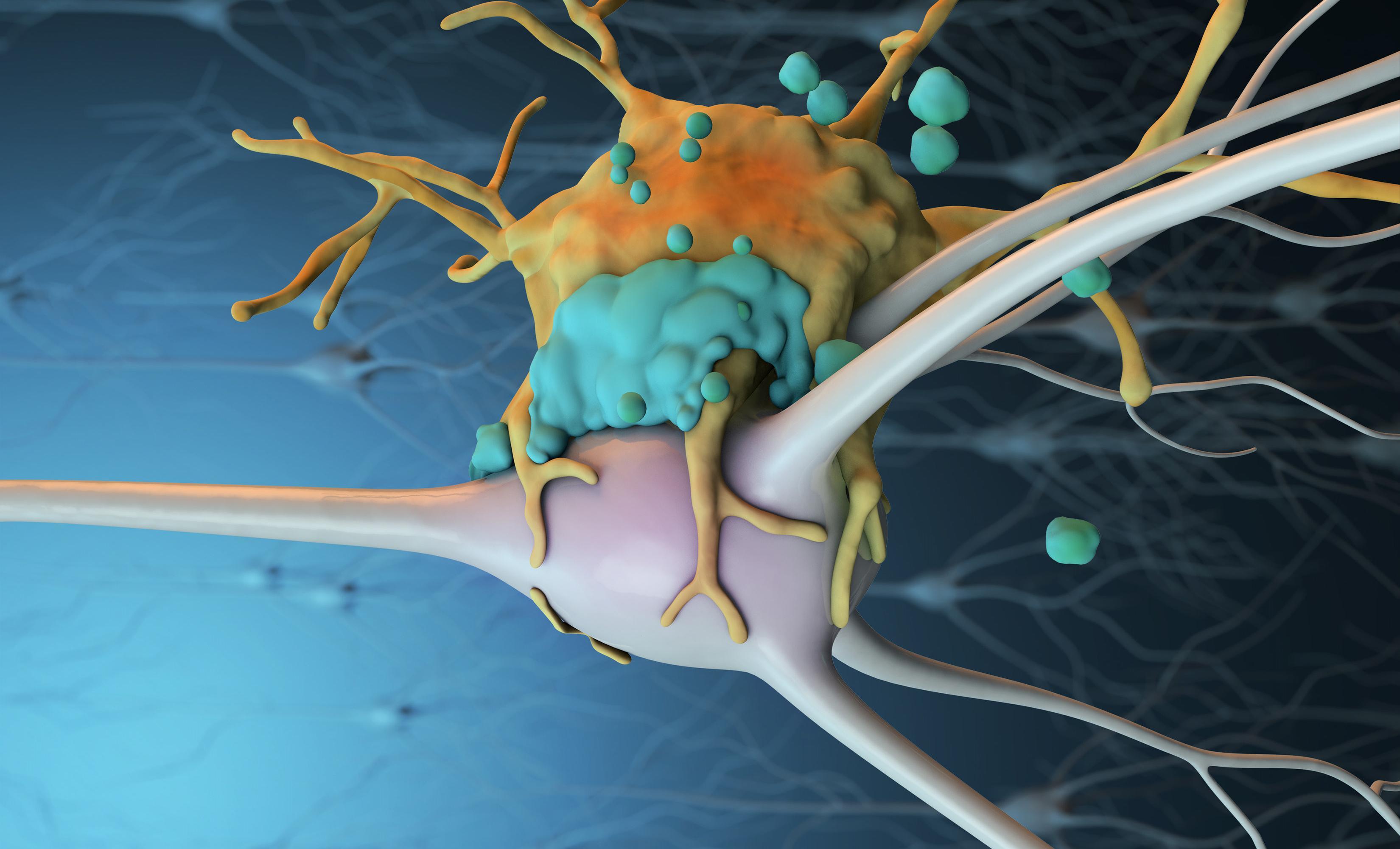 Точечная блокировка иммунитета облегчила последствия инсульта у мышей