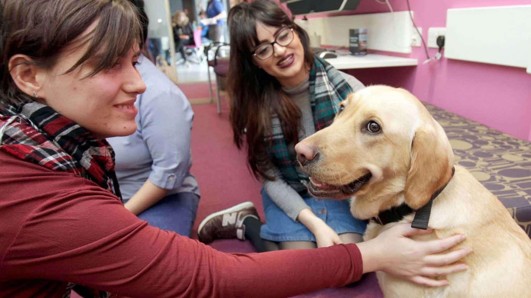Собаки помогли студентам снизить стресс и улучшить настроение