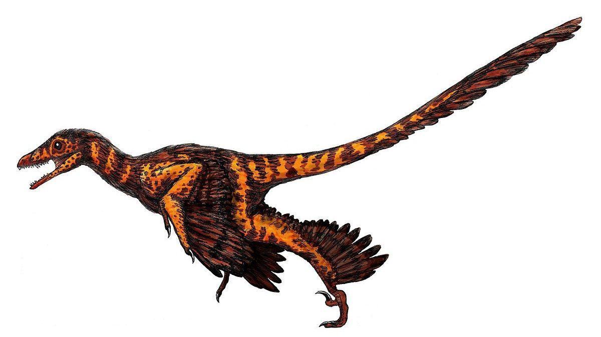 вместе с перьями динозавры приобрели перхоть
