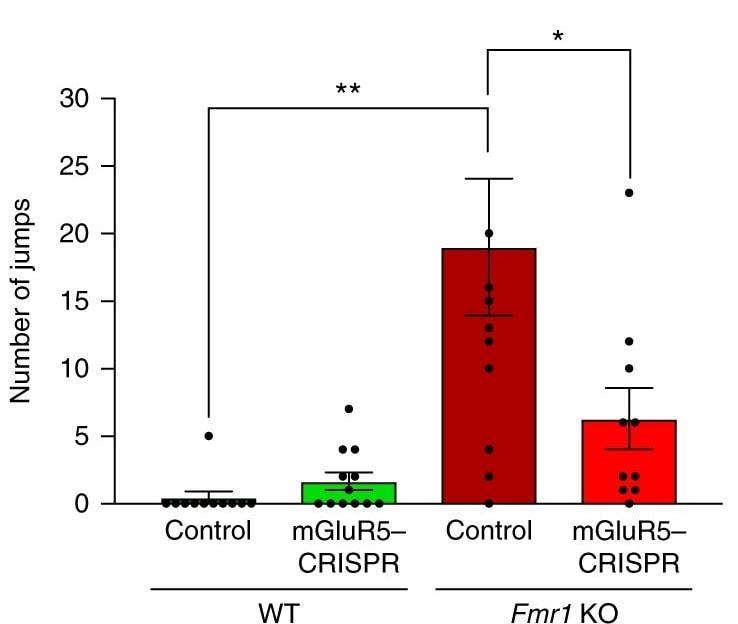 Золотые наночастицы с CRISPR вылечили мышей от аутизма