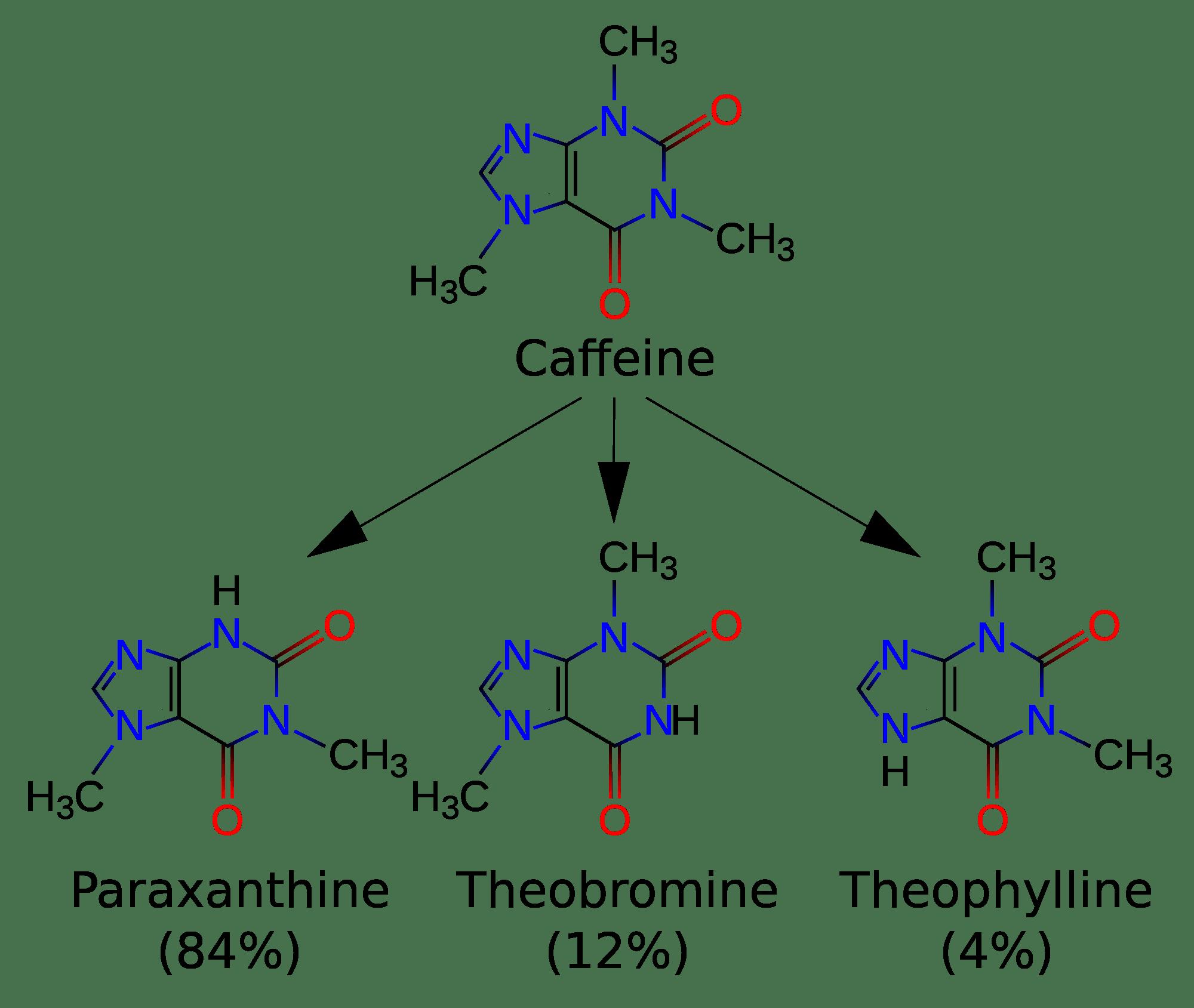 Метаболизм кофеина в печени