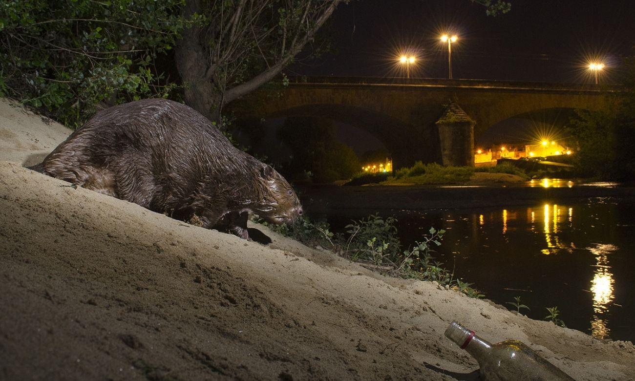 Млекопитающие скрылись от людей в темноте