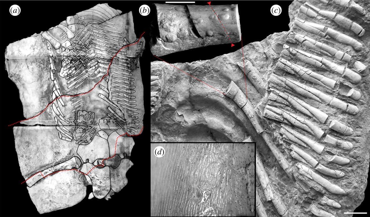 Древнейший случай туберкулёза выявлен у ископаемой морской рептилии