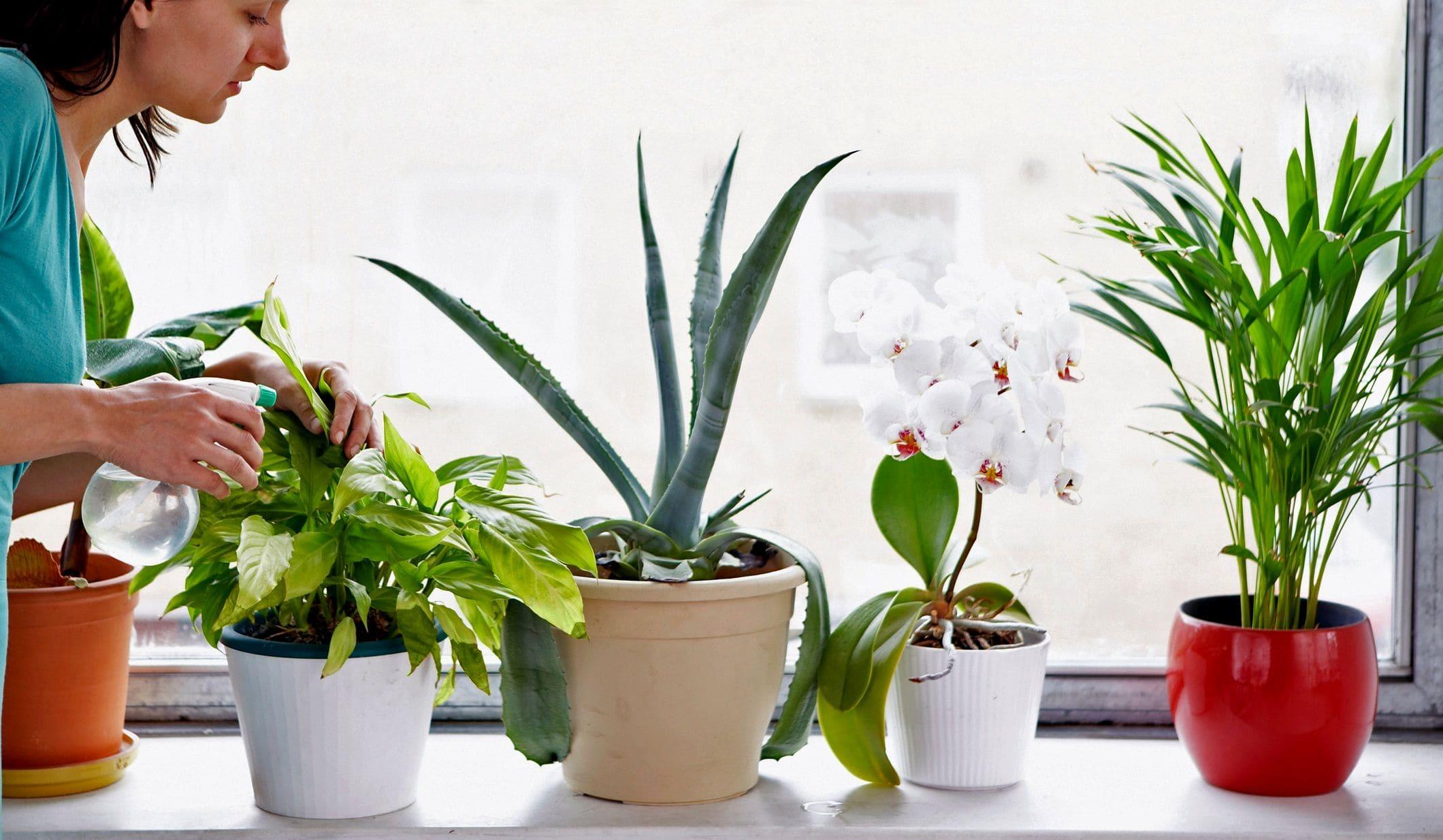 Домашние растения смогут следить за чистотой воздуха в квартире