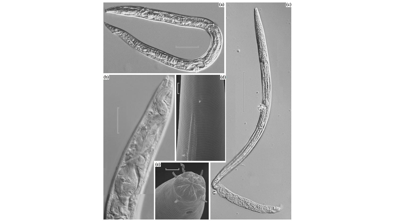 Древнейшие живые организмы планеты: червей пробудили после 40 тысяч лет сна