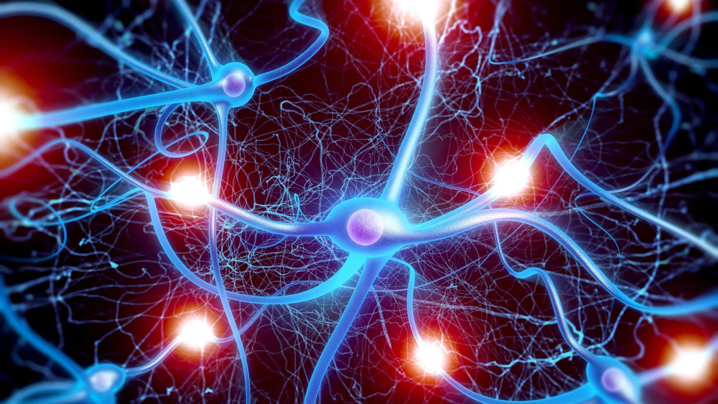 Как человеческий мозг развил высокие интеллектуальные способности