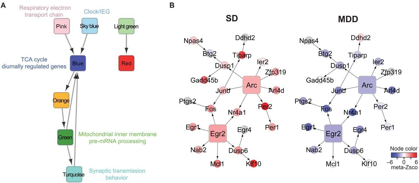 Ученые нашли генетическую связь между бессонницей и депрессией