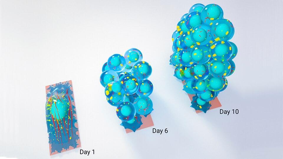 Геометрия превращает обычные клетки в стволовые