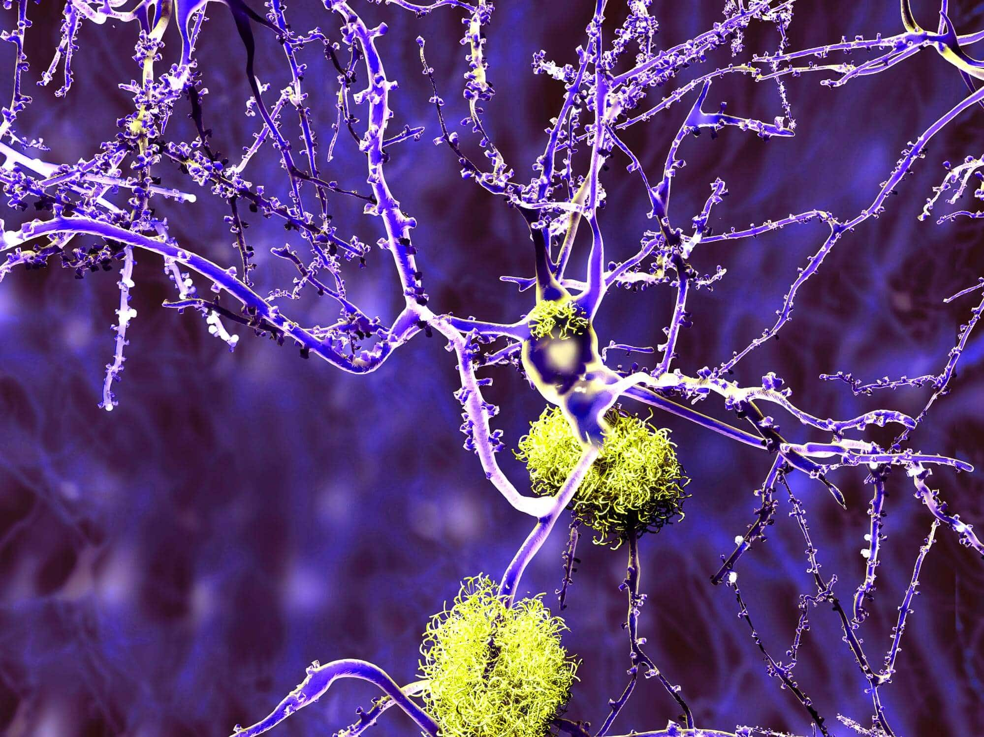 Лекарством от многих болезней станут редкие антитела