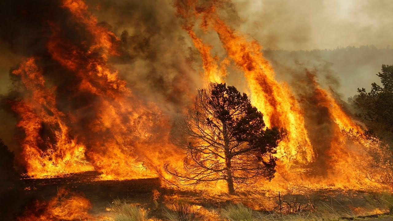 Лесные пожары как источник парниковых газов