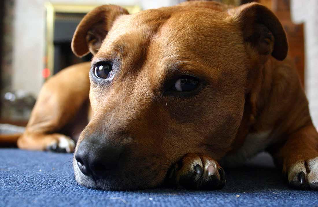 Пути миграции собак проследили по следам саркомы