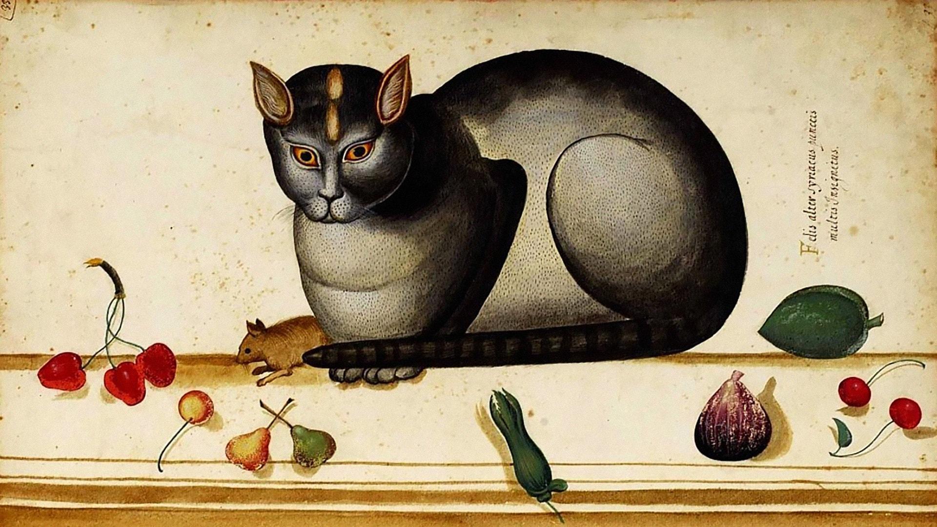Много ли наука знает о поведении домашних кошек
