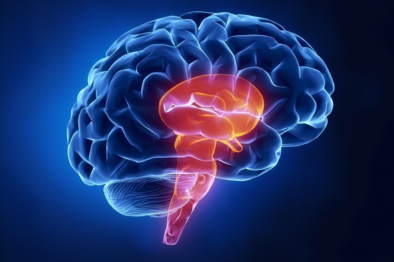 Какая часть нашего мозга самая магнитная