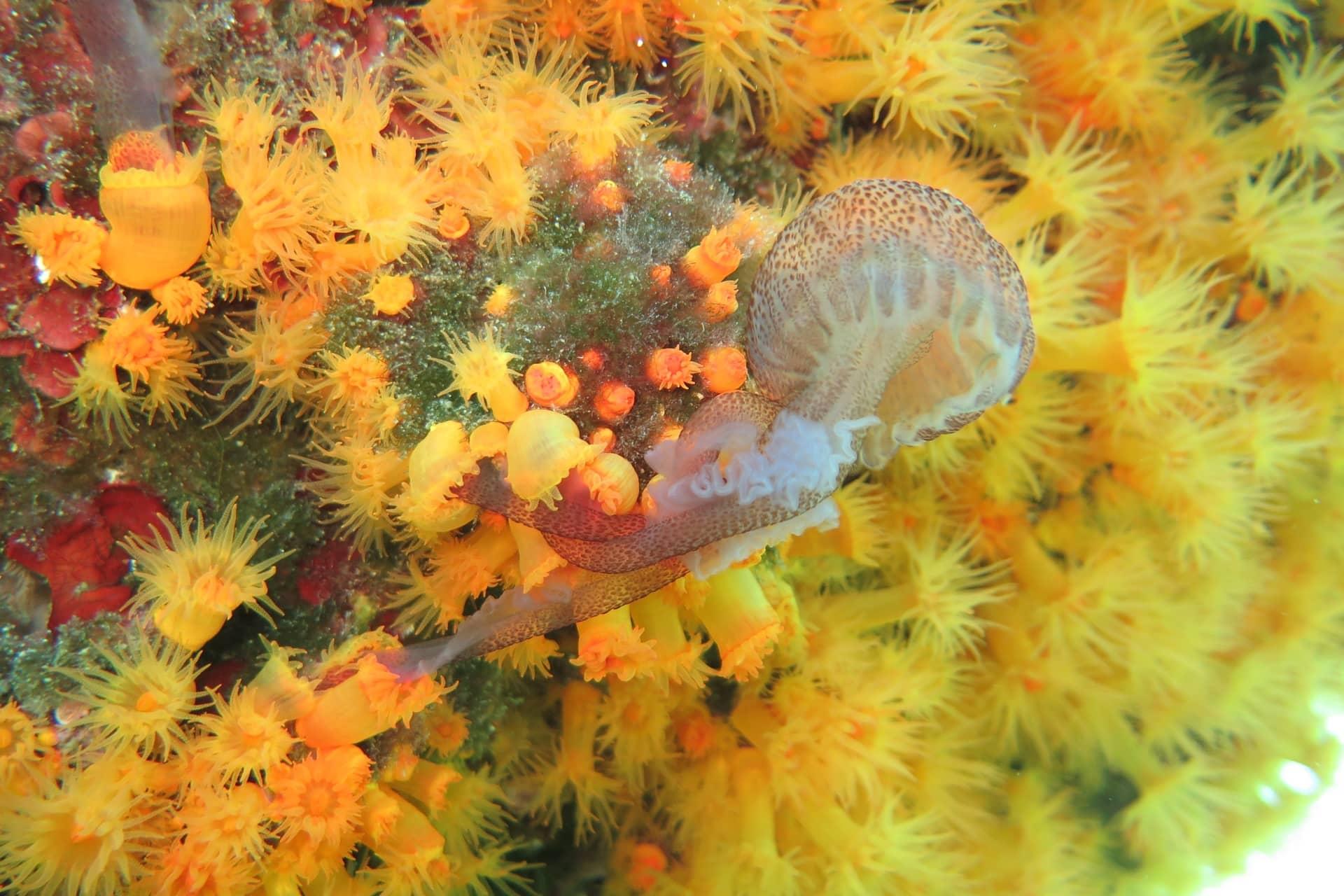 Кораллы ловят и пожирают опасных медуз