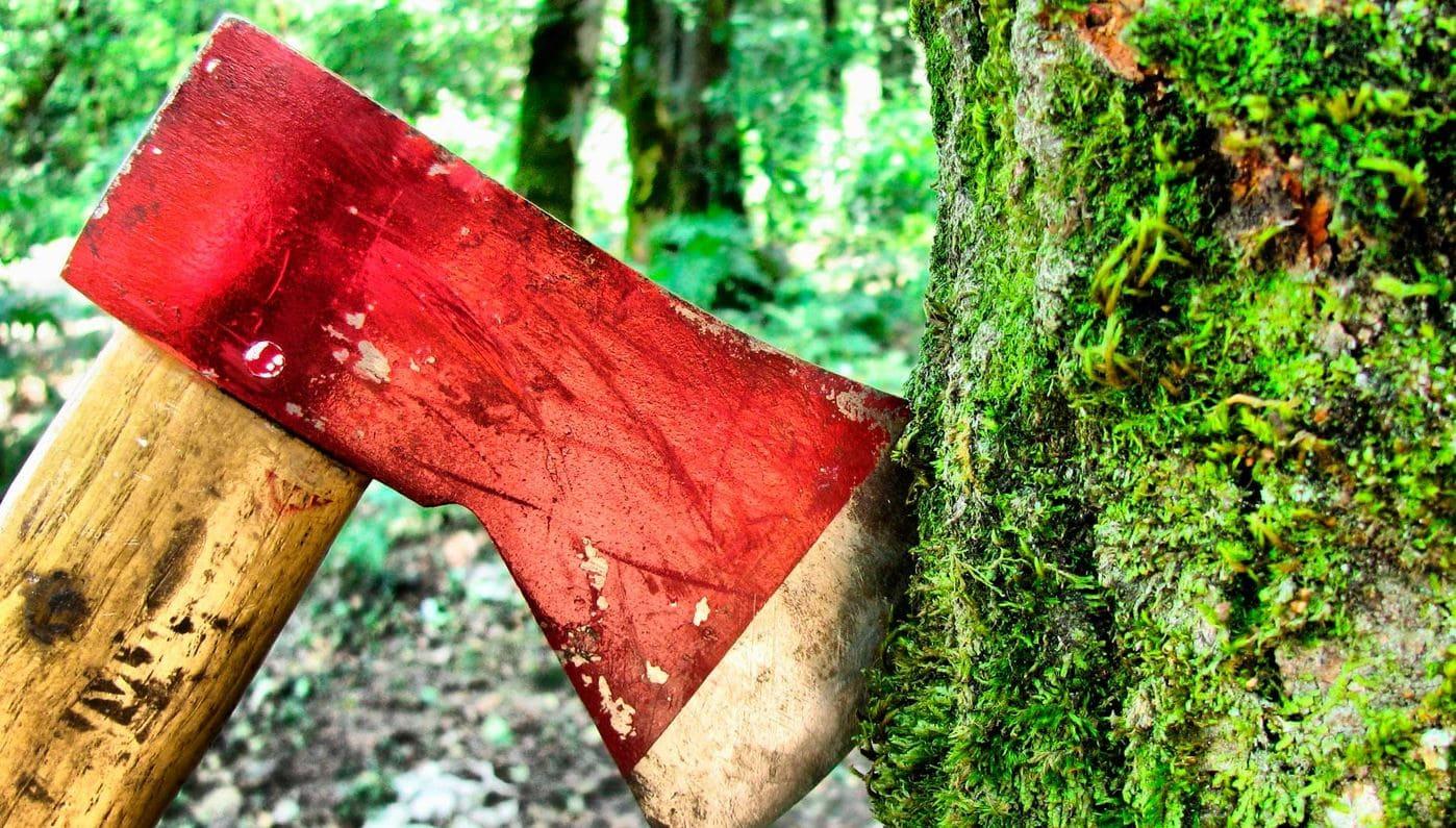 Человек начал уничтожать леса еще 45 тысяч лет назад