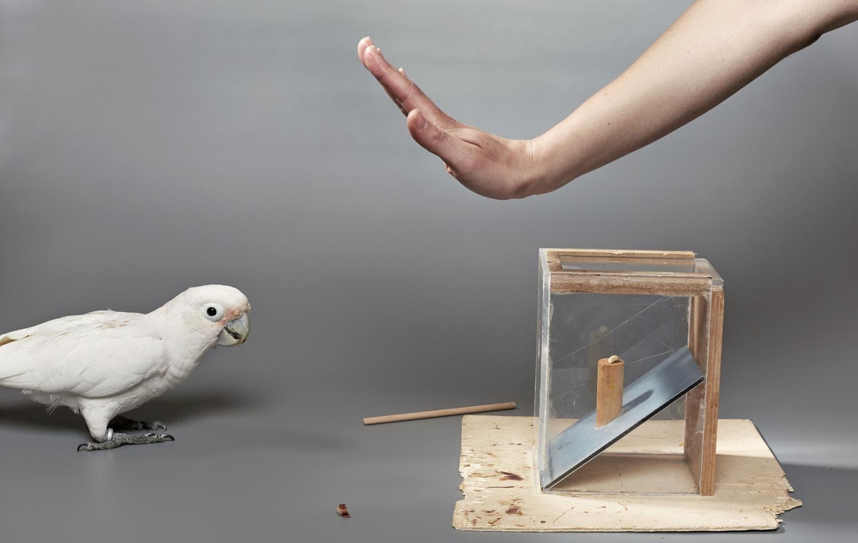 Попугаи смогли принять экономически выгодное решение