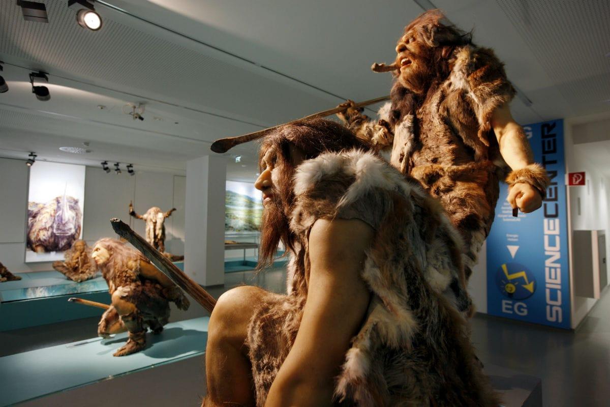 Никакой грубой силы: у неандертальцев были ловкие руки