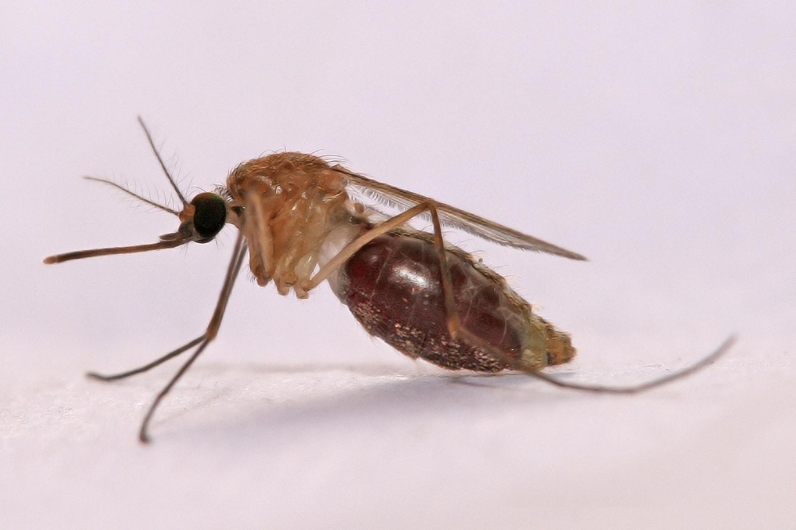 Технология редактирования генов уничтожила малярийных комаров